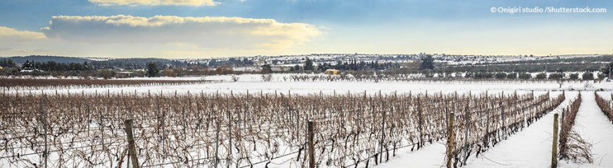 events_evinum_Weinberge_Schnee_Winter